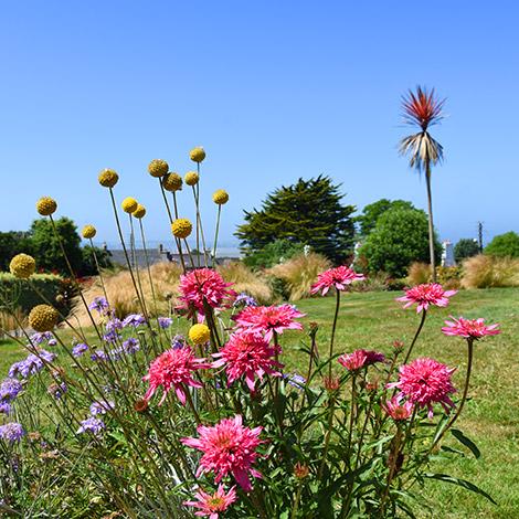 Les plantes de bord de mer du jardin de la Villa des Pins